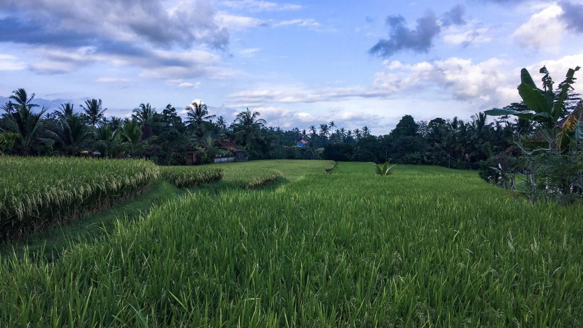 Zwei entspannte Tage in Ubud